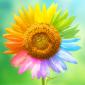 flower bullet point